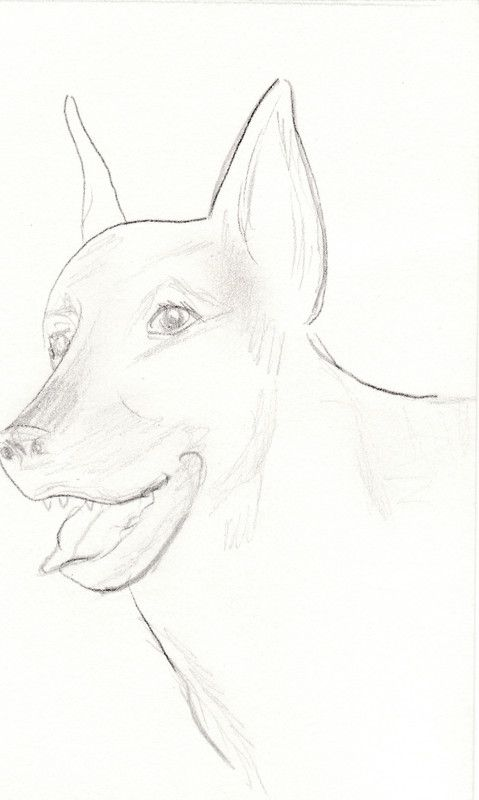 Chien - Animal a dessiner ...