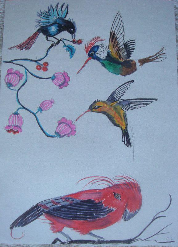 Oiseaux du paradis et oiseaux mouche centerblog - Oiseau mouche dessin ...