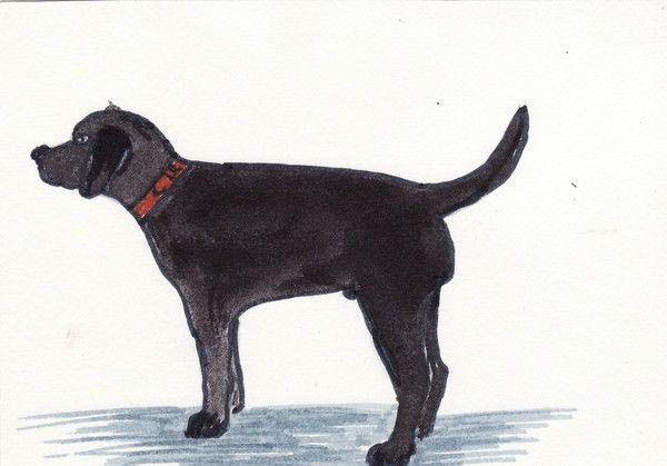 Dessin de chien noir - Dessin de petit chien ...